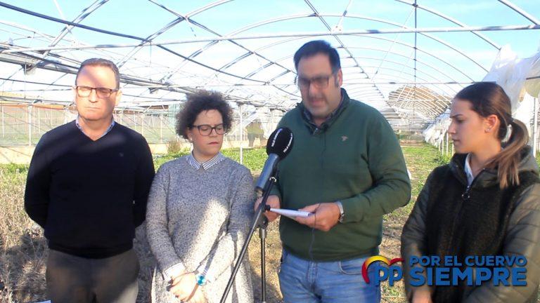 El PP reclama explicaciones al Alcalde por la falta de actividad y el abandono de invernaderos municipales